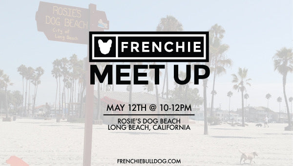 Frenchie Bulldog Meet Up- Long Beach, California Meet Up 🌴