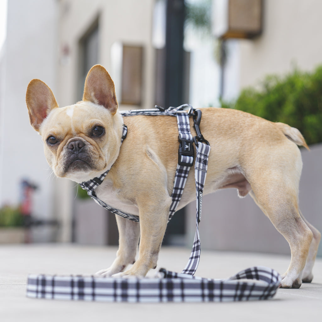 Frenchie Bulldog - Harnesses, Collars, Leashes & More