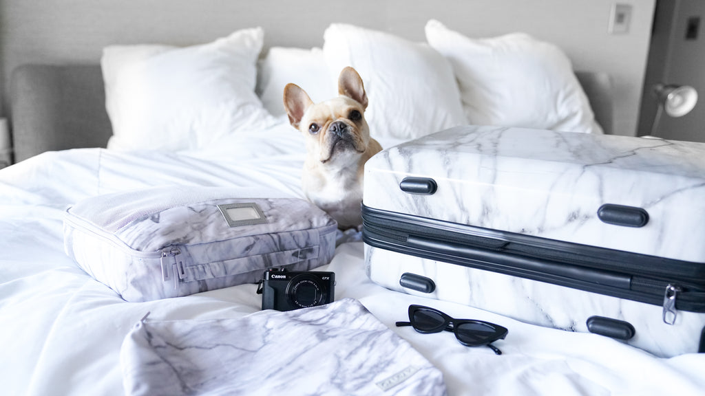 what to pack when flying with your pup