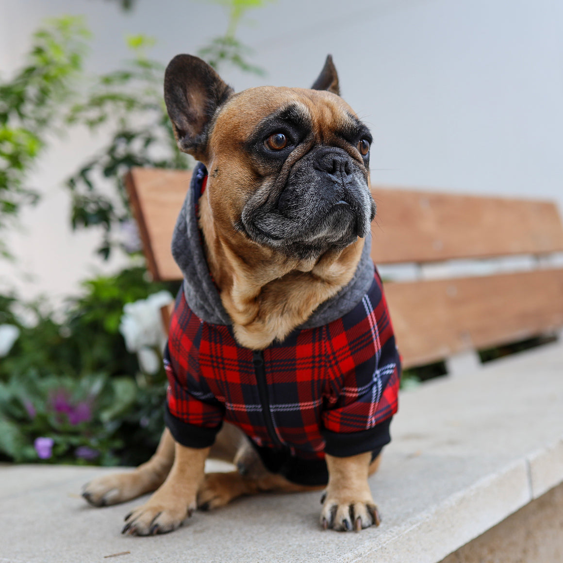 Frenchie Dog Hoodie - Lumberjack - Frenchie Bulldog - Shop Harnesses for French Bulldogs - Shop French Bulldog Harness - Harnesses for Pugs