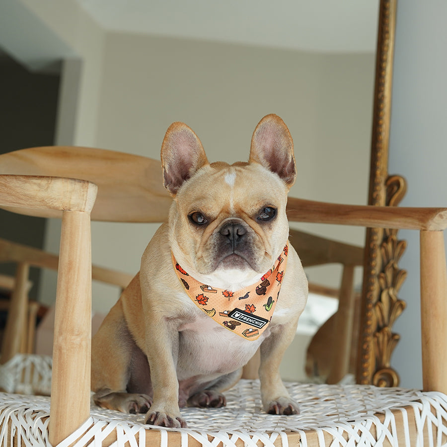 Frenchie Cooling Bandana- Thanksgiving Feast - Frenchie Bulldog - Shop Harnesses for French Bulldogs - Shop French Bulldog Harness - Harnesses for Pugs