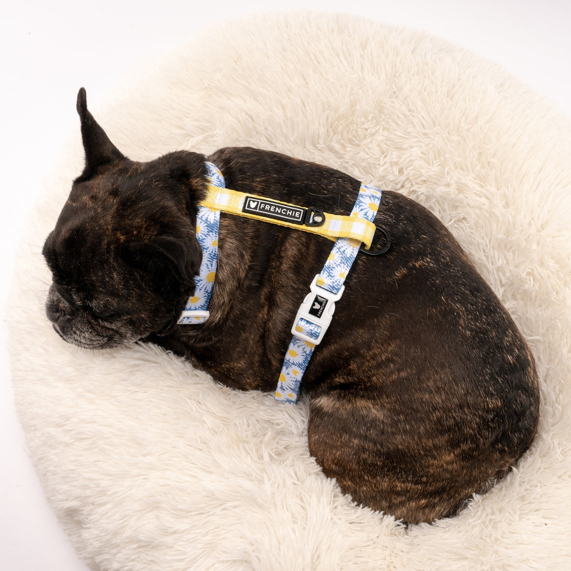 Frenchie Strap Harness - Daisy