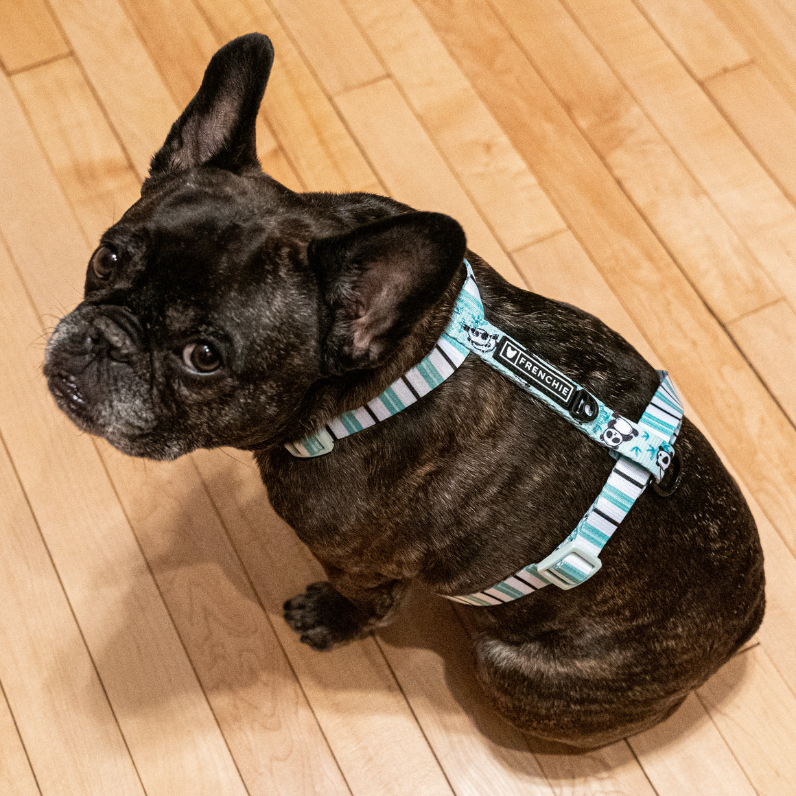 Frenchie Strap Harness - Green Panda - Frenchie Bulldog - Shop Harnesses for French Bulldogs - Shop French Bulldog Harness - Harnesses for Pugs