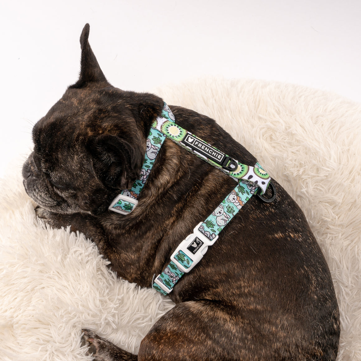Frenchie Strap Harness - Koala