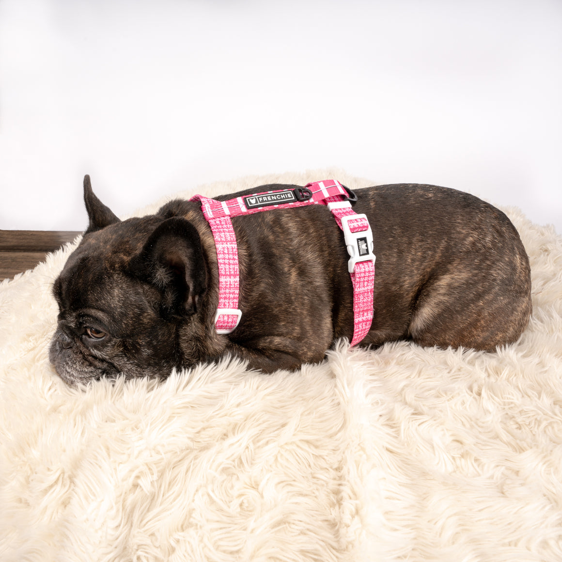 Frenchie Strap Harness - Pink Tweed - Frenchie Bulldog - Shop Harnesses for French Bulldogs - Shop French Bulldog Harness - Harnesses for Pugs