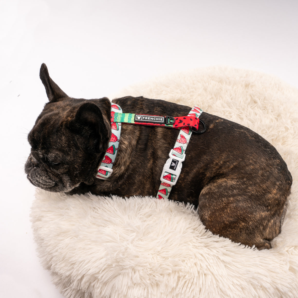Frenchie Strap Harness - Watermelon