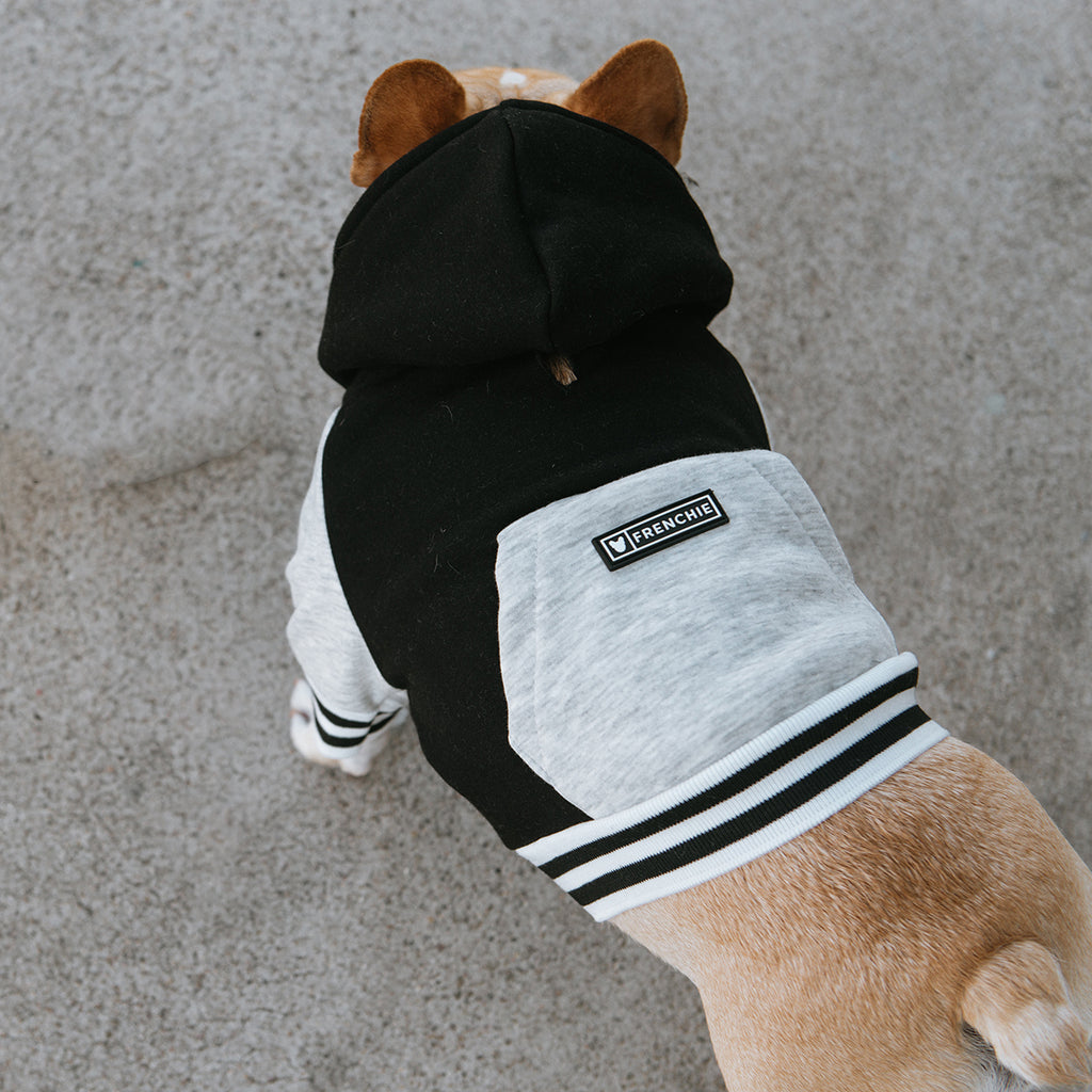 Frenchie Dog Hoodie - Black Varsity - Frenchie Bulldog - Shop Harnesses for French Bulldogs - Shop French Bulldog Harness - Harnesses for Pugs