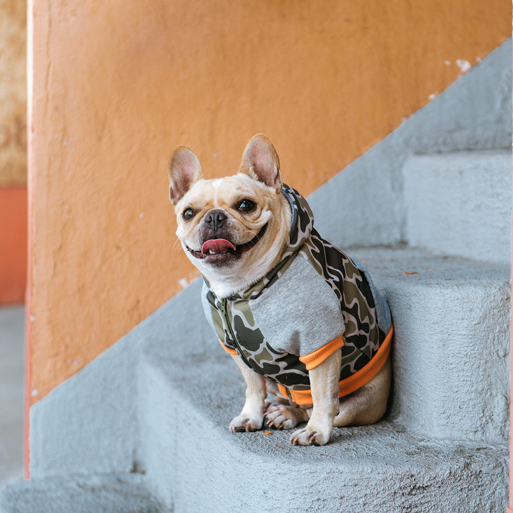 Frenchie Dog Hoodie - Green Frenchie Camo - Frenchie Bulldog - Shop Harnesses for French Bulldogs - Shop French Bulldog Harness - Harnesses for Pugs