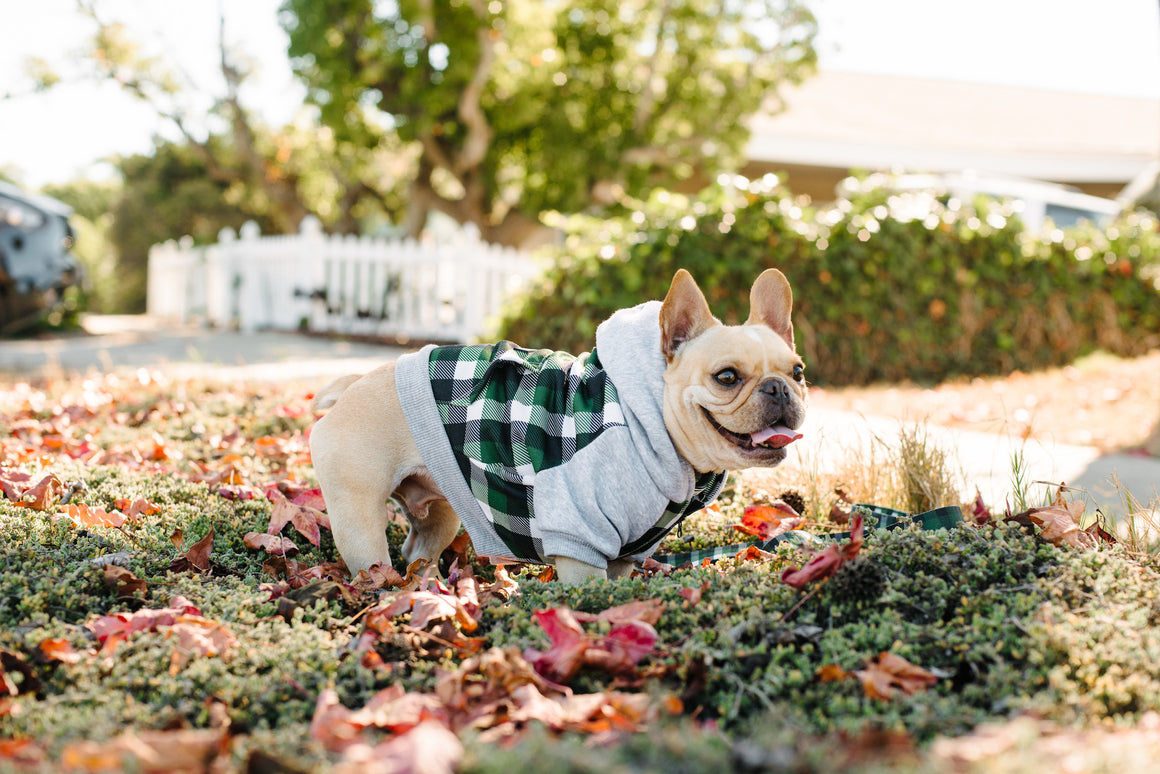 Frenchie Dog Hoodie - Emerald Plaid - Frenchie Bulldog - Shop Harnesses for French Bulldogs - Shop French Bulldog Harness - Harnesses for Pugs