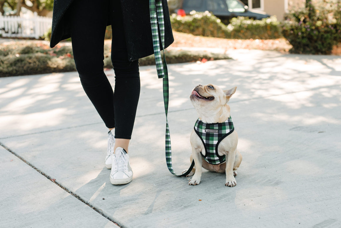 Frenchie Duo Reversible Harness - Emerald Plaid - Frenchie Bulldog - Shop Harnesses for French Bulldogs - Shop French Bulldog Harness - Harnesses for Pugs