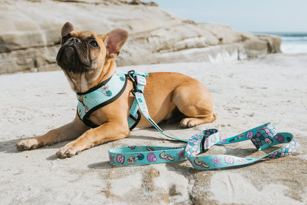 Frenchie Duo Reversible Harness - Under The Sea - Frenchie Bulldog - Shop Harnesses for French Bulldogs - Shop French Bulldog Harness - Harnesses for Pugs