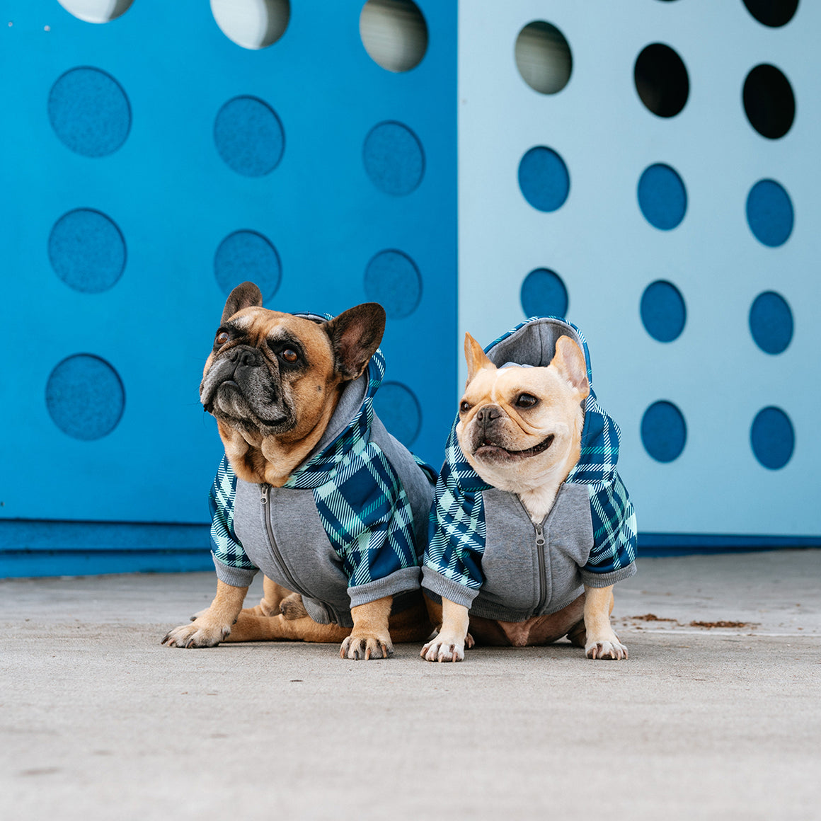 Frenchie Dog Hoodie - Blue Bird Plaid