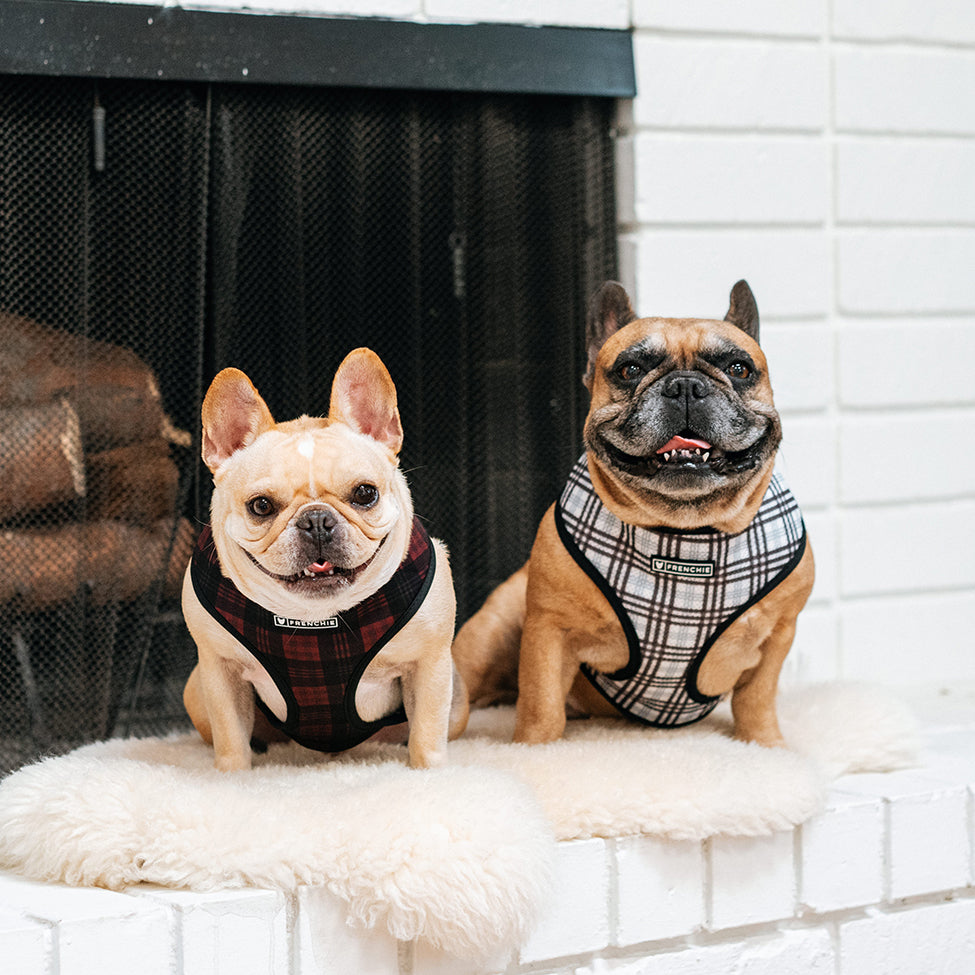 Frenchie Duo Reversible Harness - Buffalo Plaid