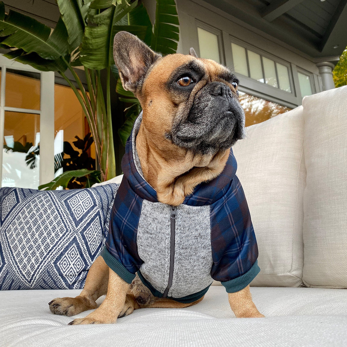 Frenchie Dog Hoodie - Navy Plaid - Frenchie Bulldog - Shop Harnesses for French Bulldogs - Shop French Bulldog Harness - Harnesses for Pugs