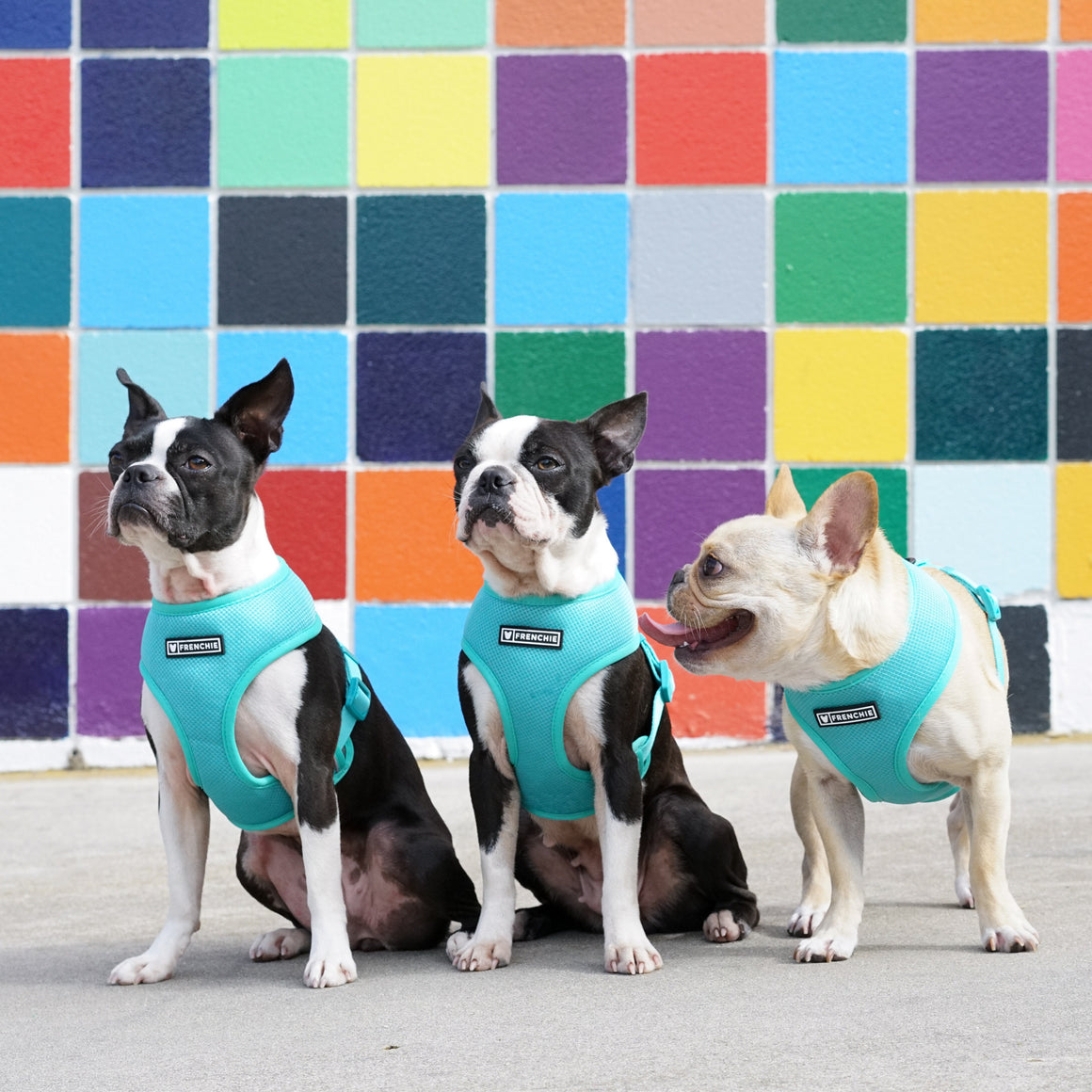 Frenchie Duo Reversible Harness - Teal/Grey