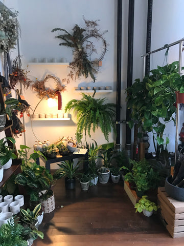 plant shop houseplants oakland shopping