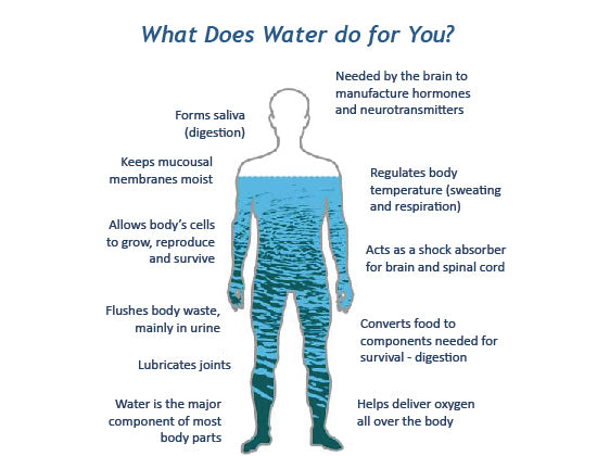 body water benefits