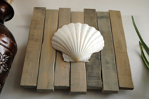 scallop seashell art on wood