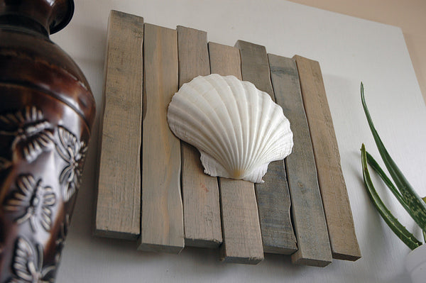 seashell art decor