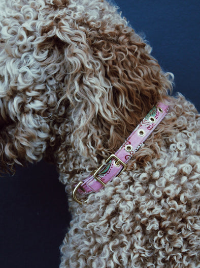 Bubble Baby Buckle Collar