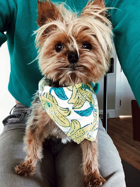 Endless Summer Bandana