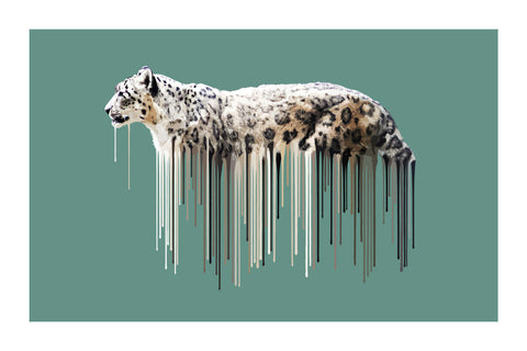 Snow Leopard - Sage by Carl Moore