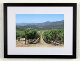 'Napa rows' - Original Wine Art - California Vineyard Photography, framed