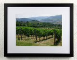 'Rufina Hills' - Original Wine Art - Tuscan Vineyard Photography, framed