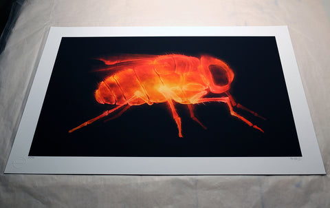 'X-Fly' (Fire)' print