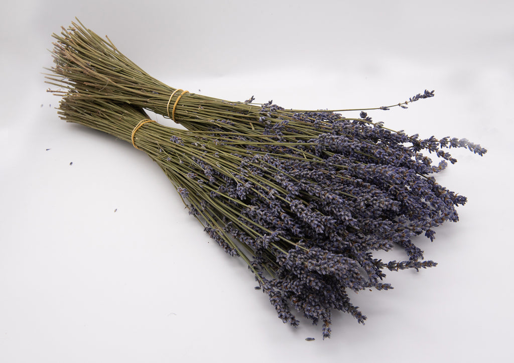 Intermedia Dried Lavender Bunch - Box of 50