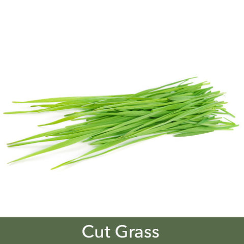 Cut Grass Soy Candles