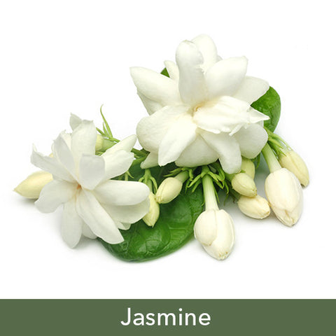 Jasmine Soy Candles