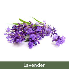 Lavender Soy Candles