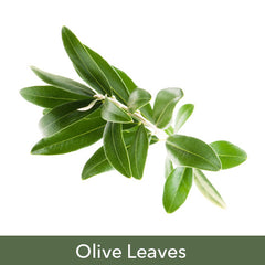Olive Leaves Soy Candles