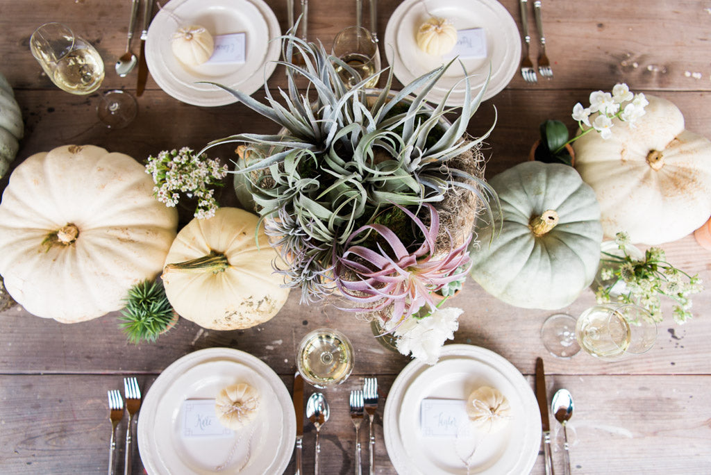 WHITE GREEN PUMPKINS FALL THANKSGIVING DECOR WITH SUCCULENTS AIR PLANTS AND POTTERY AND COLONIAL HOUSE OF FLOWERS IN NOVEMBER