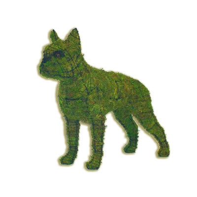Lit Wire Topiary,  Boston Terrier for Home & Garden Decor by Colonial House of Flowers