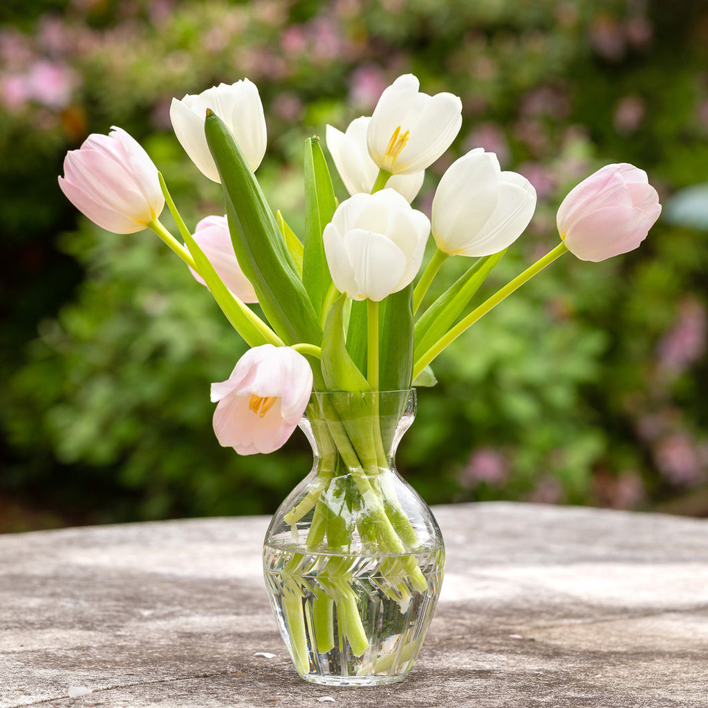 Pretty Pink And White Tulips In a Glass Vase