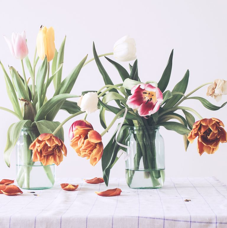 drooping tulips in a vase