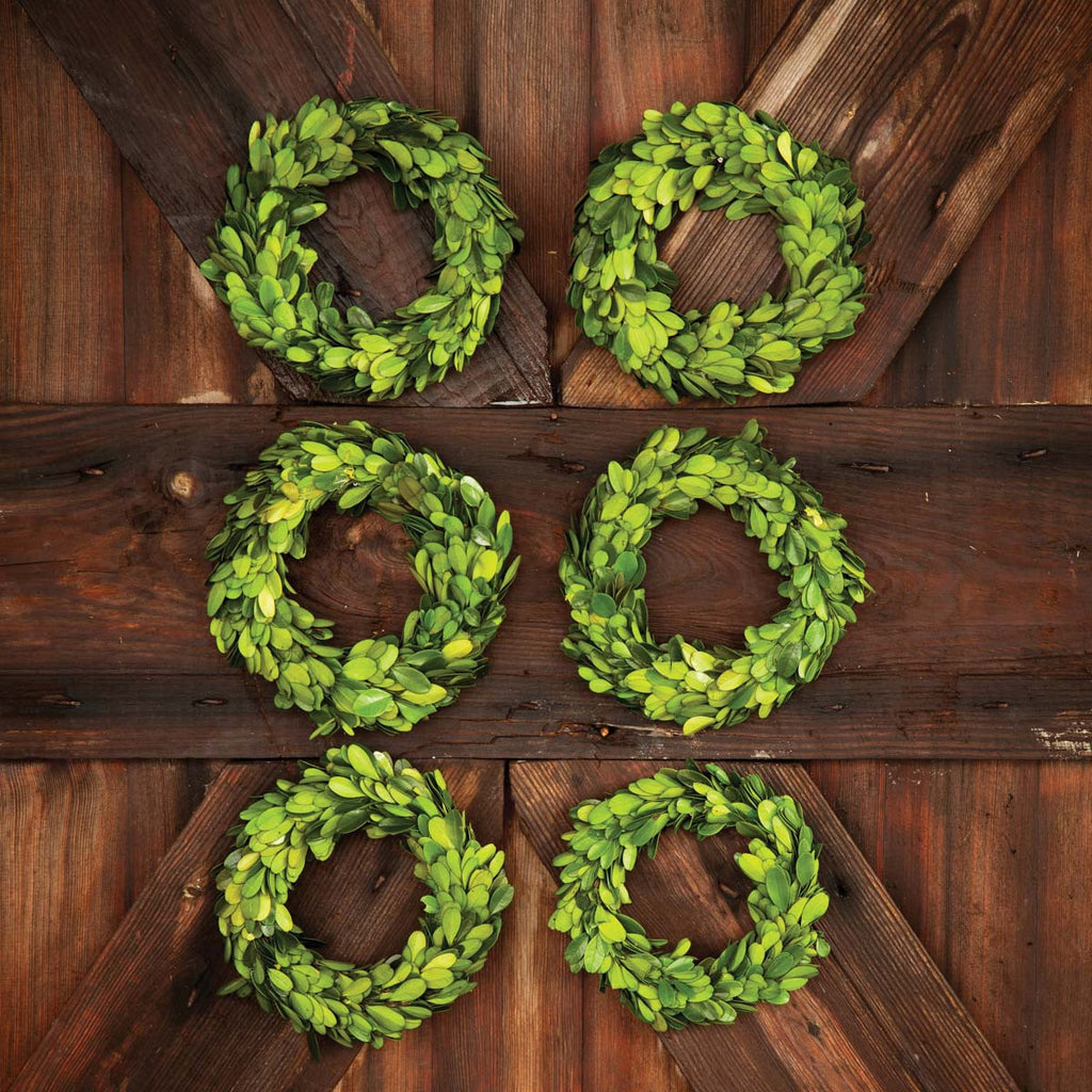 Madison Mini Preserved Boxwood Wreaths, Set of 6