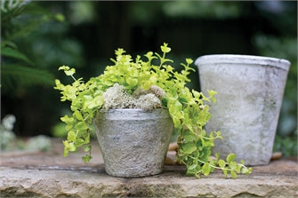 Antique White Pot Collection - Colonial House of Flowers | bespoke floral design + online shop | Atlanta, Georgia