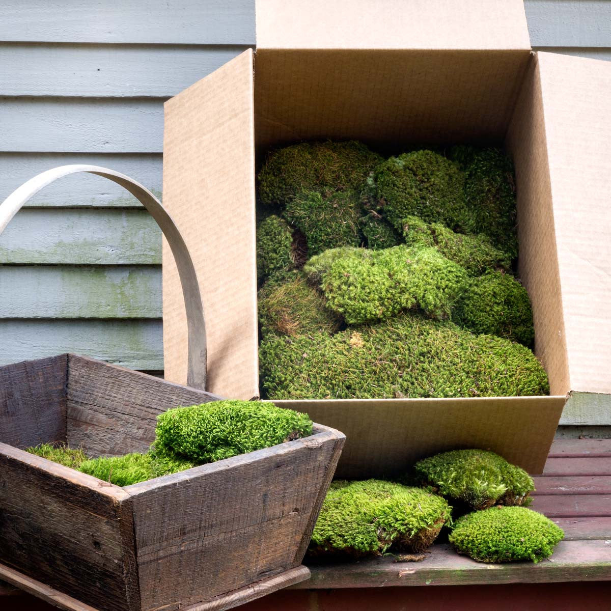 Mood Moss It Box Colonial House of Flowers Atlanta Plants Vases Containers Florist Weddings Events Georgia Southern South