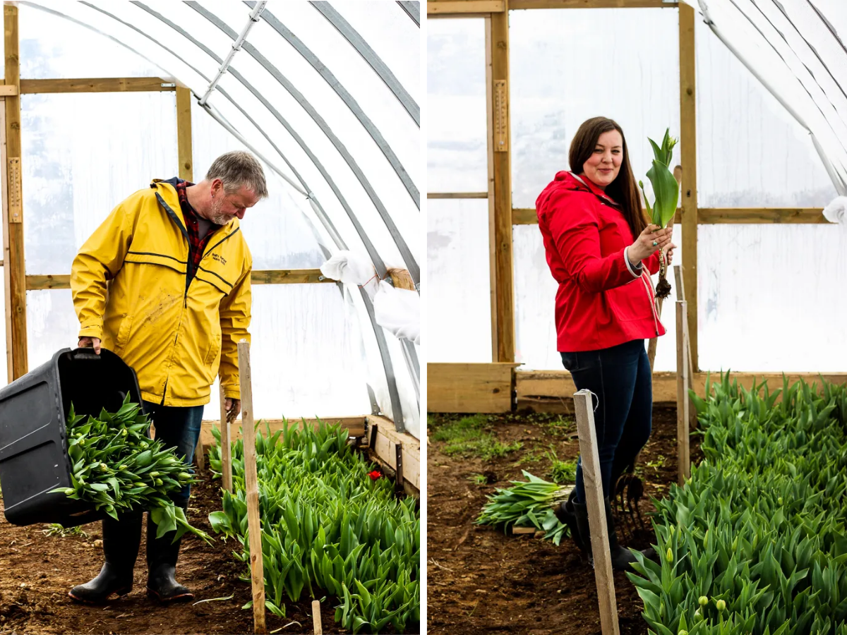 Sarah & Kenny picking tulips in the greenhouse