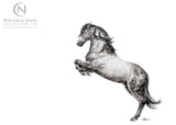 Spanish Horse Limited Edition Print 2