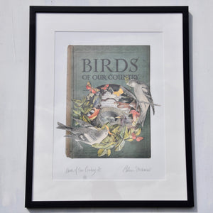 Birds of our Country Framed