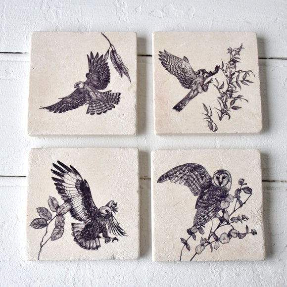 American Kestrel Sketch Coaster