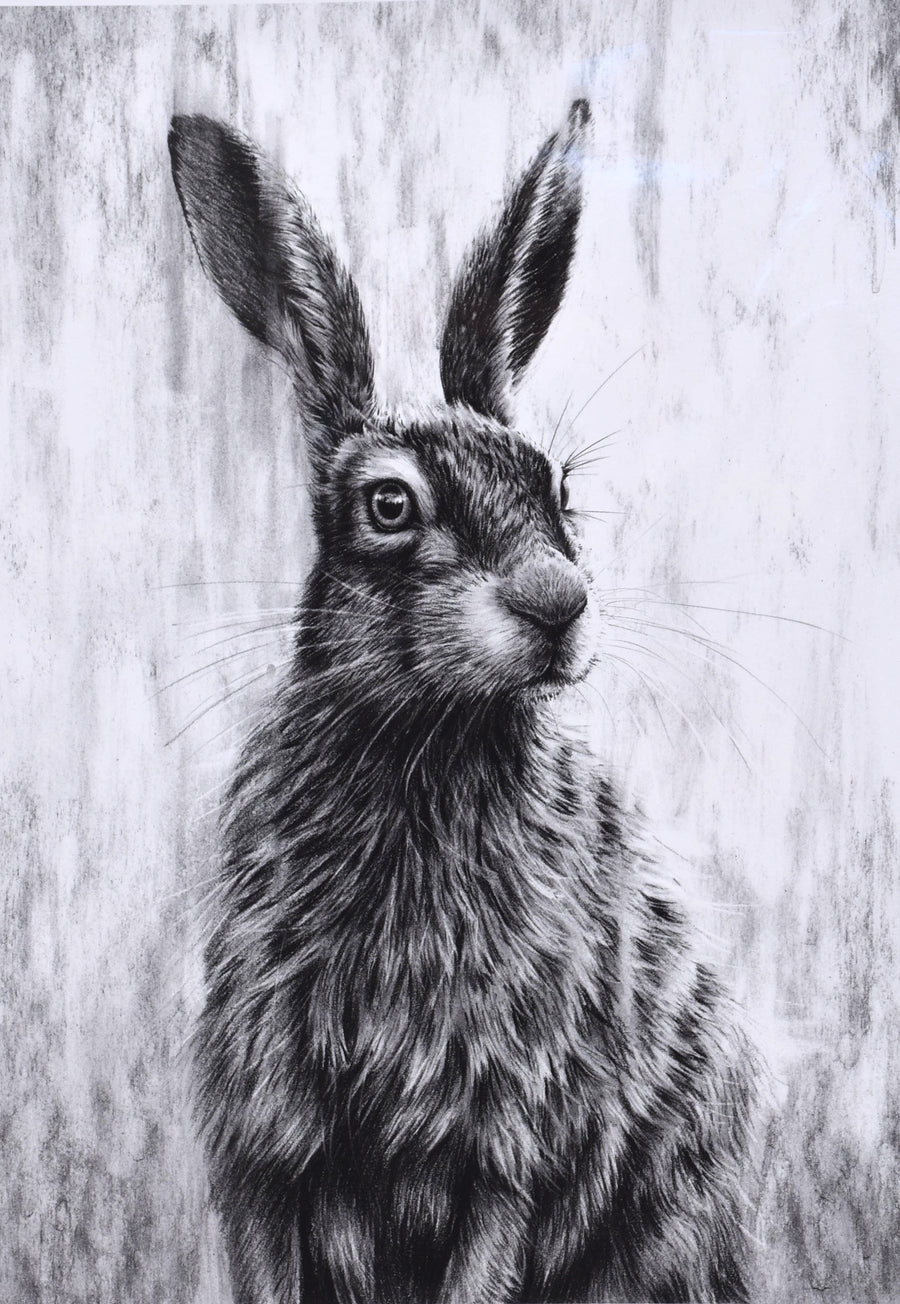 Brown Hare III