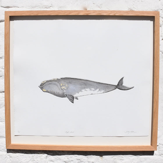 Right Whale Mezzotint Framed