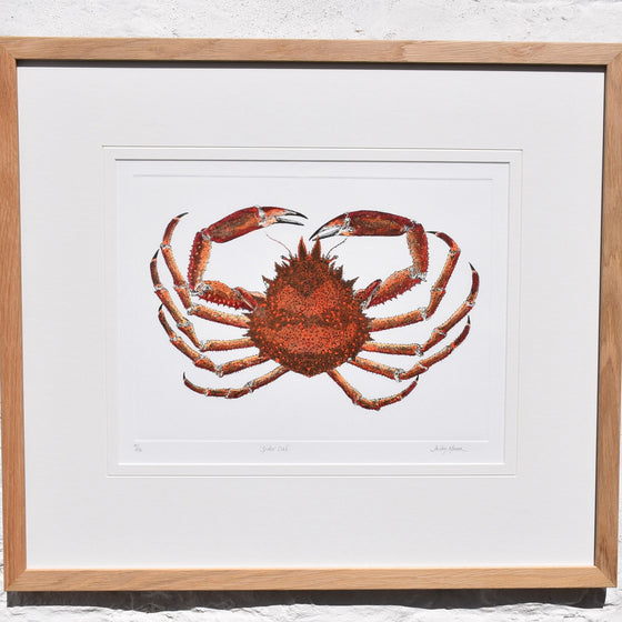 Spider Crab Mezzotint Framed