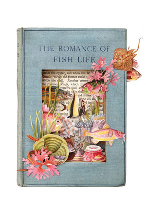 The Romance of Fish Life
