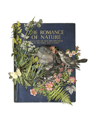 The Romance of Nature